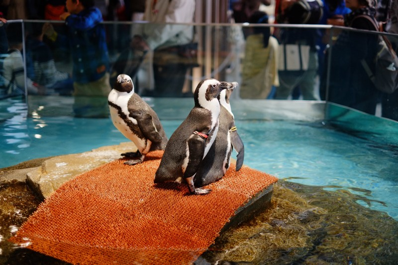 NIFREL|ペンギン