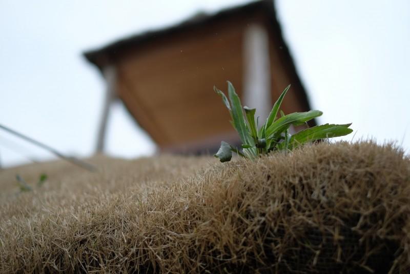 ラコリーナ近江八幡|生え始める草