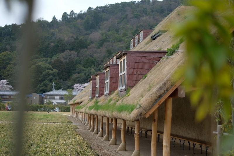 ラコリーナ近江八幡|草屋根に生える草