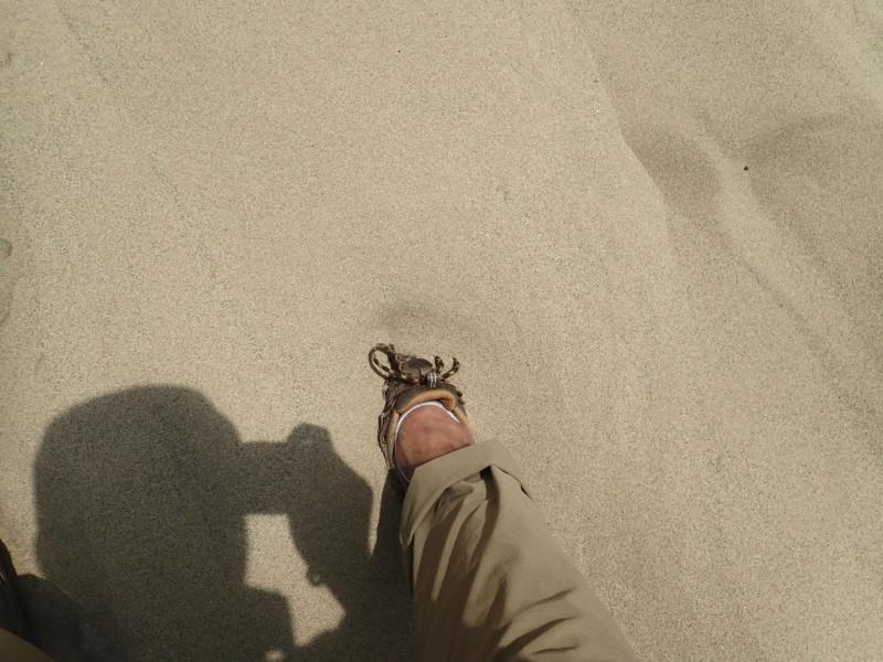 鳥取砂丘|沈む足