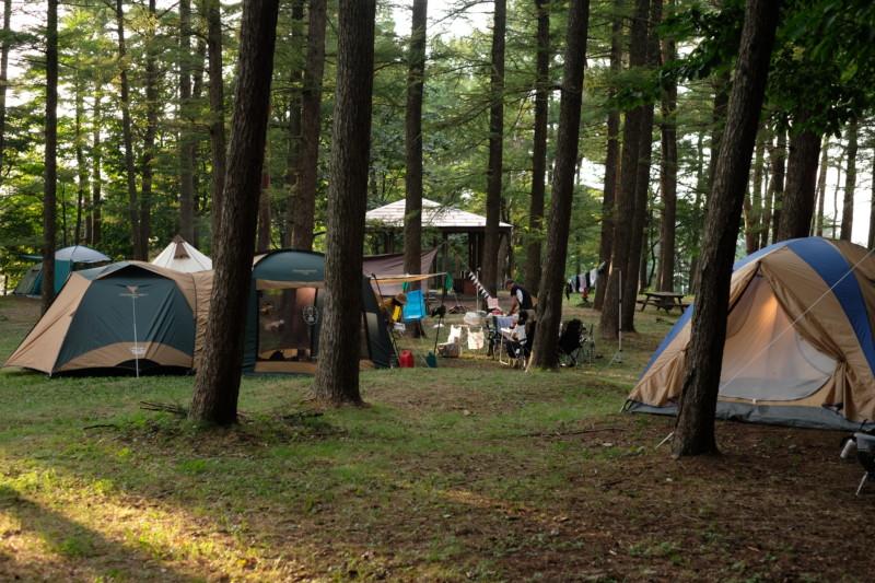 美山公園キャンプ場(新潟・糸魚川市)|林間サイト